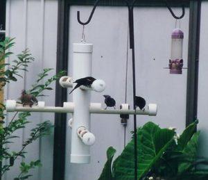 Tempat Makan Burung